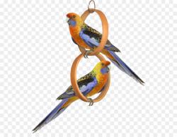 Bird Parrot Clip art - One pair of parrots