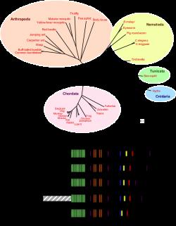 Kidins220/ARMS in evolution. (A) Dendrogram of Kidins220/ARMS ...