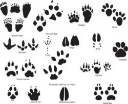 Free Animal Paw Print, Download Free Clip Art, Free Clip Art ...