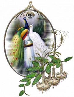 Glitter Gif Picgifs peacock 4815072   GIF PICS #1   Pinterest ...