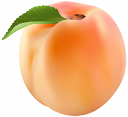 Peach PNG Clip Art Image | Gallery Yopriceville - High-Quality ...