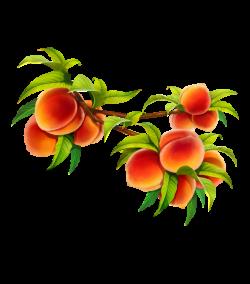 Plant,Flower,Peach,Fruit,Flowering plant,Tree,Branch ...
