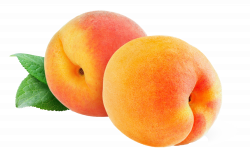 Peach PNG Image - PurePNG | Free transparent CC0 PNG Image Library