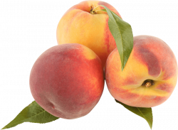 peaches png - Free PNG Images | TOPpng