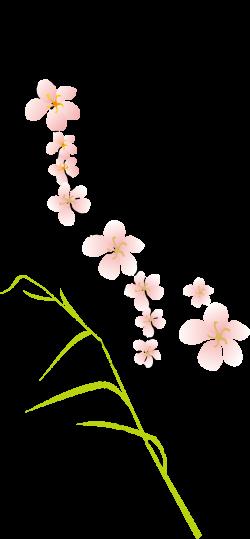 Flores de durazno Clip art - Flores de durazno 825*1780 transparente ...