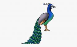 Peacock Clipart National Bird - National Bird In Cartoon ...