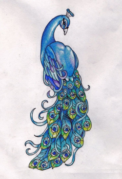 Simple Colorful Peacock Drawing - Cliparts.co | Art ...