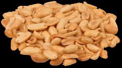 Peanut PNG Transparent Peanut.PNG Images. | PlusPNG