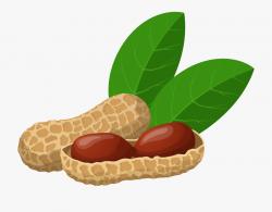 Peanuts Png Clip Art - Groundnut Clipart , Transparent ...