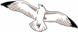 File:Seagull.svg - Wikimedia Commons