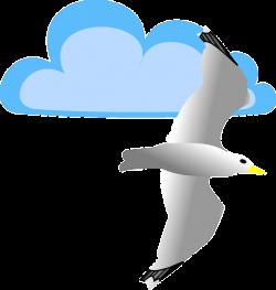 ForgetMeNot: seagulls