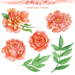 Watercolor Coral Peony Clipart - digital printable clipart - 300 dpi PNG,  transparent background, watercolor