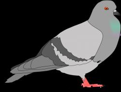 Pigeon Images Clip Art | Djiwallpaper.co
