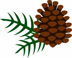 pine cones | Pine Cone and Pine Needles - Free Clip Art | Pine Cone ...