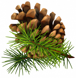 18best Of Pine Cone Clip Art - Clip arts & coloring pages