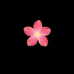 Pink Flower PNG by SashaSonesica on DeviantArt