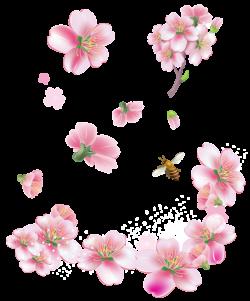 Spring Pink Trees Flowers PNG Clipart | dekopaj | Pinterest | Pink ...