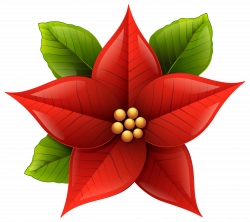 Free Poinsettia Flower Cliparts, Download Free Clip Art, Free Clip ...