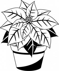 28+ Collection of Christmas Poinsettia Clipart Black And White ...