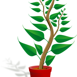 Potted Plant Clip Art - mehmetcetinsozler.com
