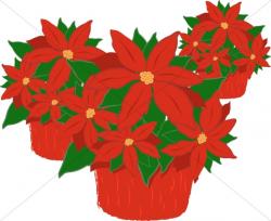 Trio of Poinsettia Plants | Religious Christmas Clipart