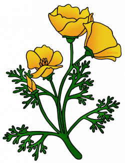 Buttercup Flower Clipart at GetDrawings.com | Free for personal use ...
