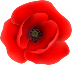 Poppy Flower Garden Gallery - Flower Decoration Ideas
