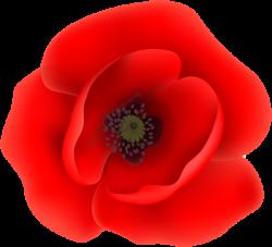Poppy Flower Garden Gallery - Flower Decoration Ideas