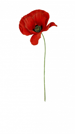 Anzac Flower Poppy Choice Image - Flower Decoration Ideas