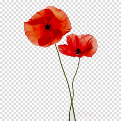 Poppy Flower clipart - Flower, Red, Poppy, transparent clip art