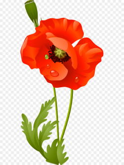 Flower PNG Poppy Clipart download - 603 * 1200 - Free ...