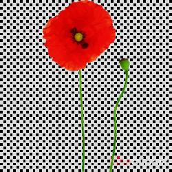 coquelicot red flower corn poppy poppy clipart - Coquelicot ...