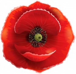Poppy Transparent PNG Clip Art Image | AMAPOLAS .... PUPPIESS ...