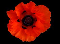 Image - Poppy.png | Forgotten Hope Secret Weapon Wiki | FANDOM ...