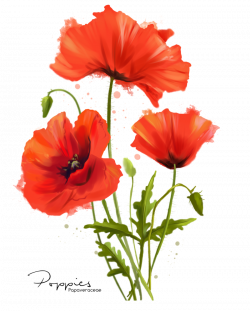 My flowers Poppies watercolor painting by Kajenna on DeviantArt