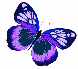Blue and Purple Butterfly PNG Clipart | Gallery Yopriceville - High ...