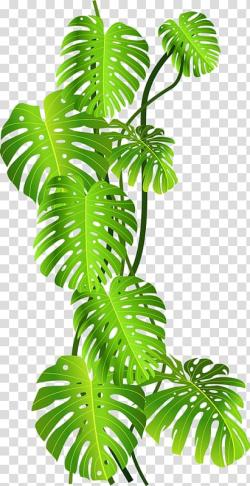 Green leafed plant , Tropics Jungle Tropical rainforest ...