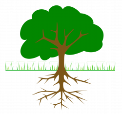 flower-with-roots-clipart-plant_tree_branches_and_roots_1-1331px