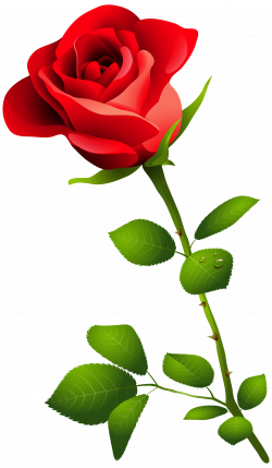 Red Rose With Stem Png Clipart Image Transparent Free Download ...