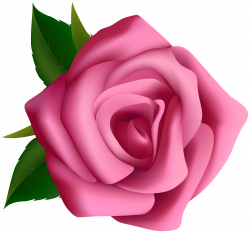 Pink Rose Clipart PNG Image | Gallery Yopriceville - High-Quality ...