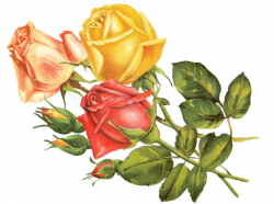 Rose yellow by jinifur on DeviantArt