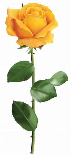 Free photo: Yellow rose - Plant, Park, Outdoors - Free Download - Jooinn
