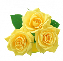 Yellow-Rose by yotoots on DeviantArt