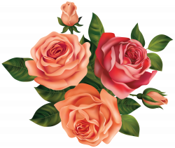 Beautiful Roses Clipart Image | Gallery Yopriceville - High-Quality ...