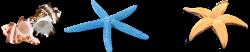 Seashell Sea snail Clip art - starfish 1282*267 transprent Png Free ...