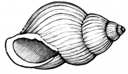 Shell Clip Art Free   Clipart Panda - Free Clipart Images