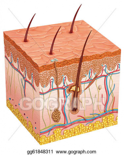 Stock Illustration - Human skin. Clipart gg61848311 - GoGraph