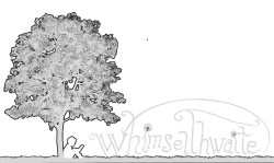 Curriculum — Whimselthwaite