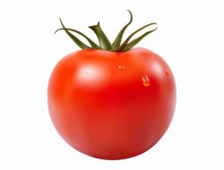Red Tomato Png Clipart Picture - Png Tomato - tomato png ...