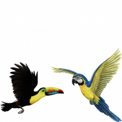 Tropical Birds Wall Stickers Combo - Easy Decoration for themed rooms
